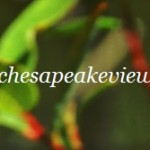 ChesapeakeView